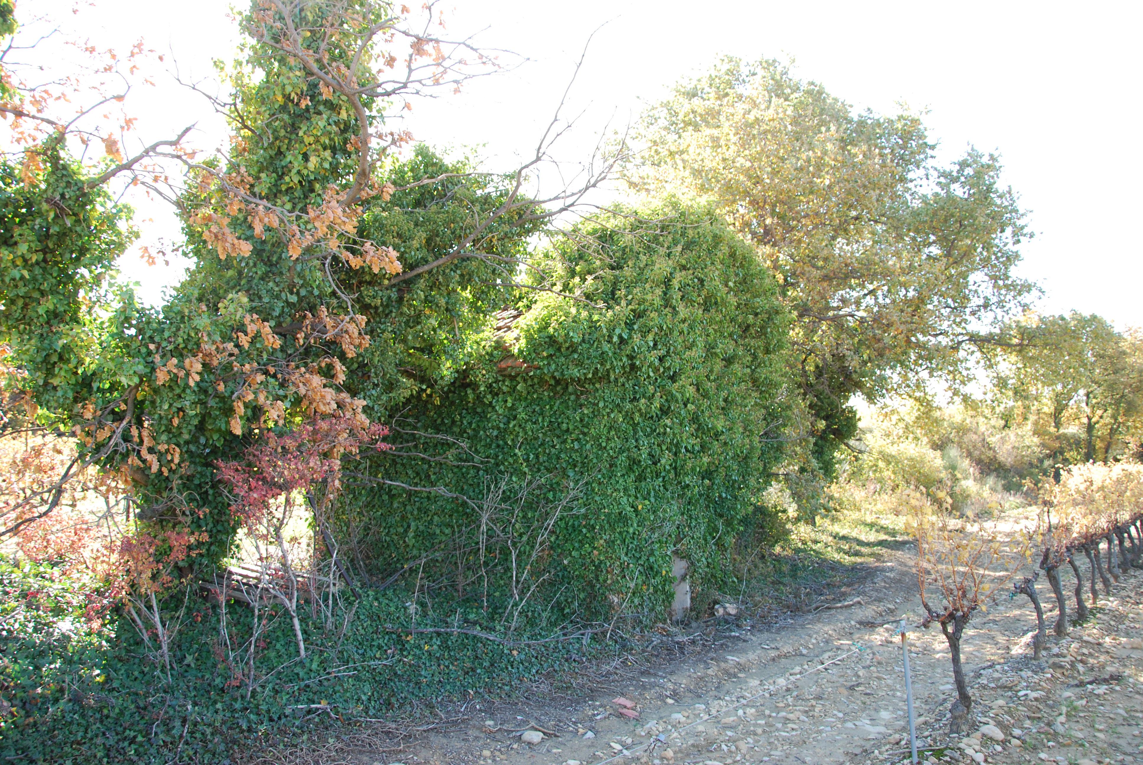 Vue du cabanon au bord du chemin - novembre 2014